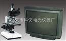 XSP-E/CTV型生物电视显微镜